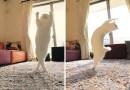 Эта кошка танцует как настоящая балерина.