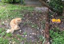 В США найден постоянно сердитый кот.