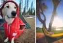 Instagram-аккаунт «Camping With Dogs» вдохновит вас отправиться в поход с вашей собакой.