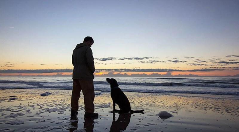 Картинки по запросу Хозяин и собака отправились на прогулку