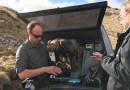 Видео: Полёт орла запечатлели с помощью 360-градусной камеры.