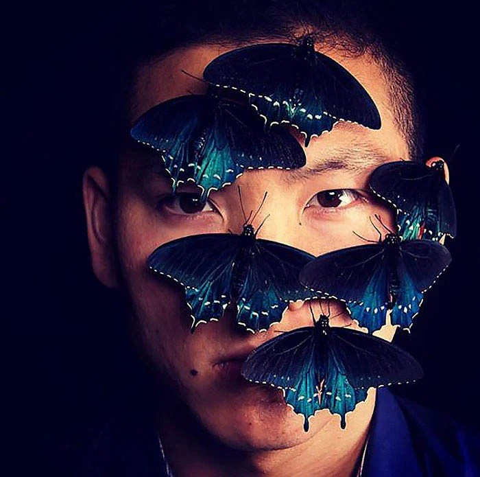 rare-blue-swallowtail-pipevine-butterfly-repopulation-tim-wong-vinegret (2)