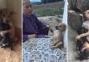 Эти два бродячих щенка не перестают обнимать друг друга даже после того, как нашли для себя новый дом.