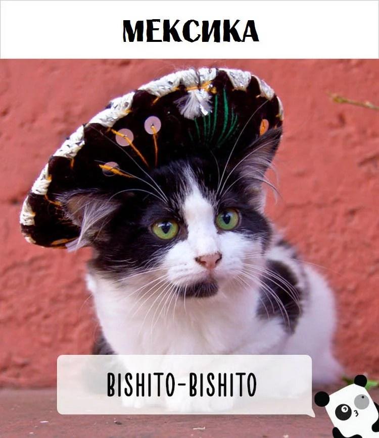cat-calling-in-different-languages-vinegret (1)