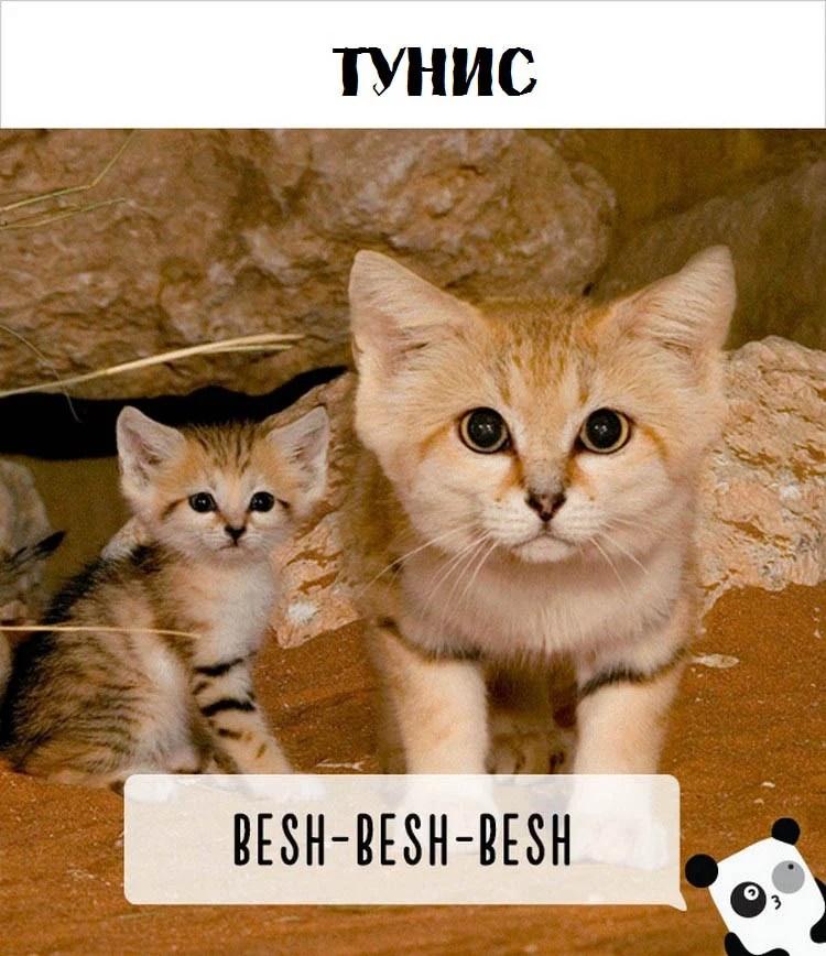 cat-calling-in-different-languages-vinegret (4)