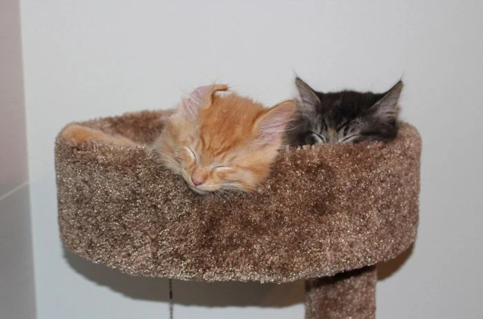 cats-sleeping-together-before-after-growing-up-renley-lili-vinegret (1)