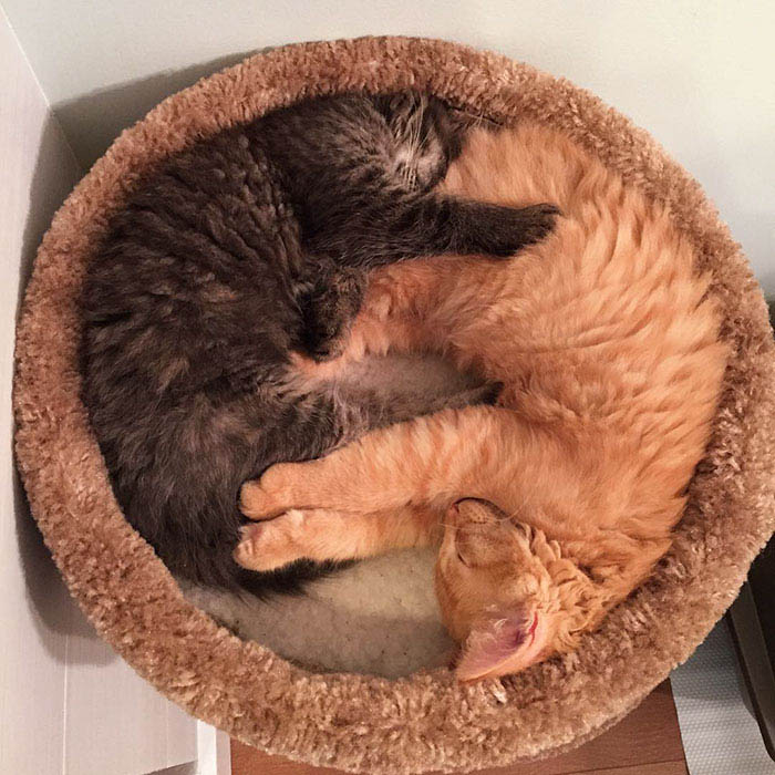 cats-sleeping-together-before-after-growing-up-renley-lili-vinegret (5)