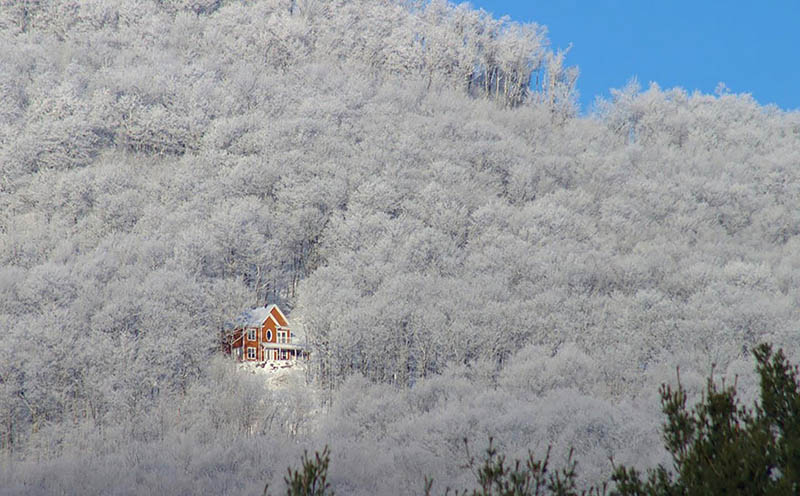 cozy-cabins-in-the-woods-vinegret (4)