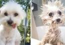 Смешные фотографии собак до и после купания.