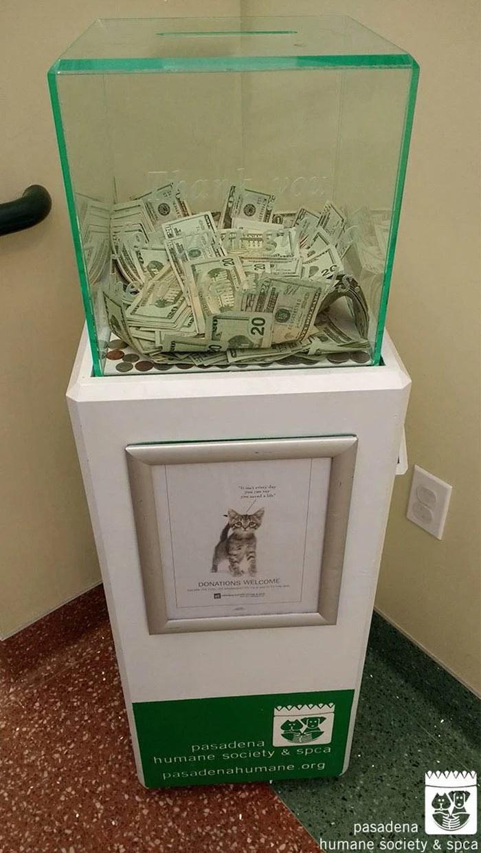 8000-dollars-anonymous-donation-animal-shelter-vinegret-1