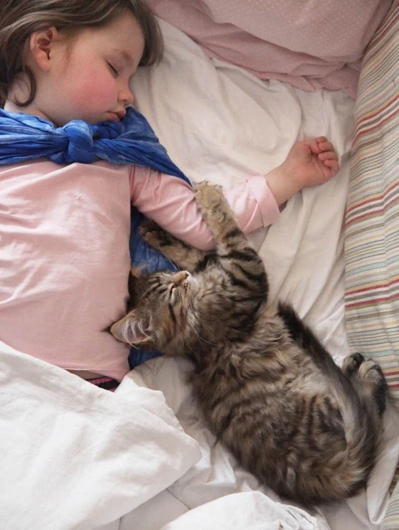 iris-and-cat-thula-vinegret-2