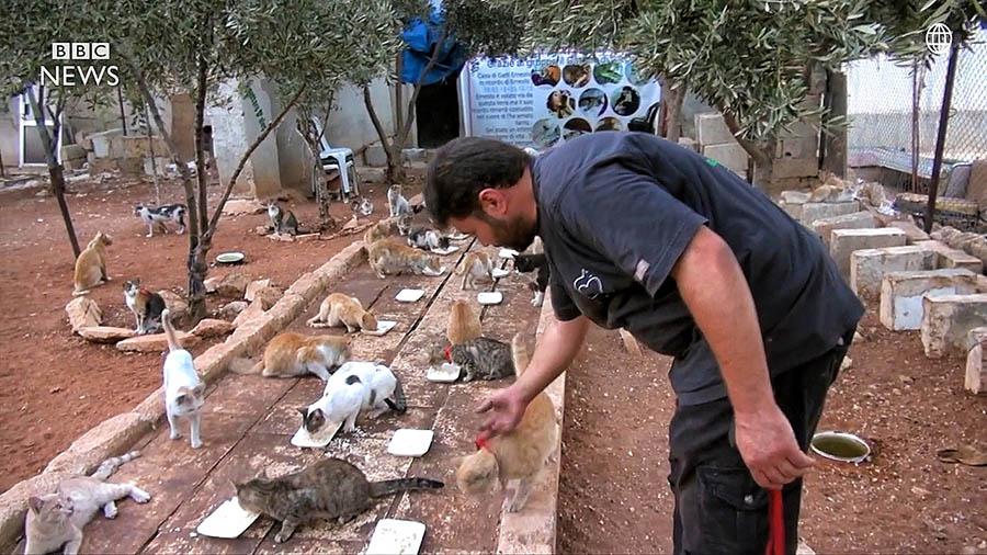 chelovek-spas-bolshe-100-koshek-v-surii-aleppo-vinegret-6 Kasih Sayang Seorang Pria Terhadap Kucing, Membuatnya Tetap Bertahan Tinggal di Zona Peperangan