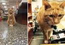 Этот кот вот уже 9 лет работает в магазине без единого выходного дня.