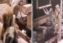 Видео: Как одна обезьяна другую будила.