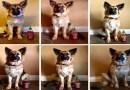 Владелец собаки измерял ее взросление с помощью бутылки из-под соуса.