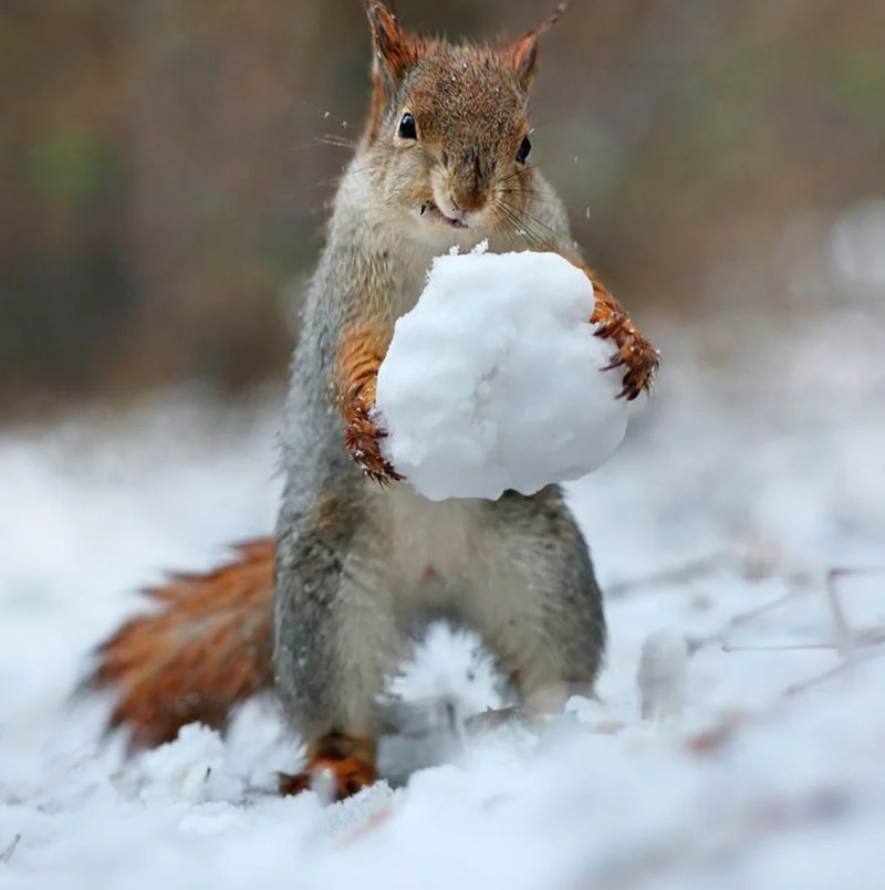 squirrel-photography-russia-vadim-trunov-vinegret-4