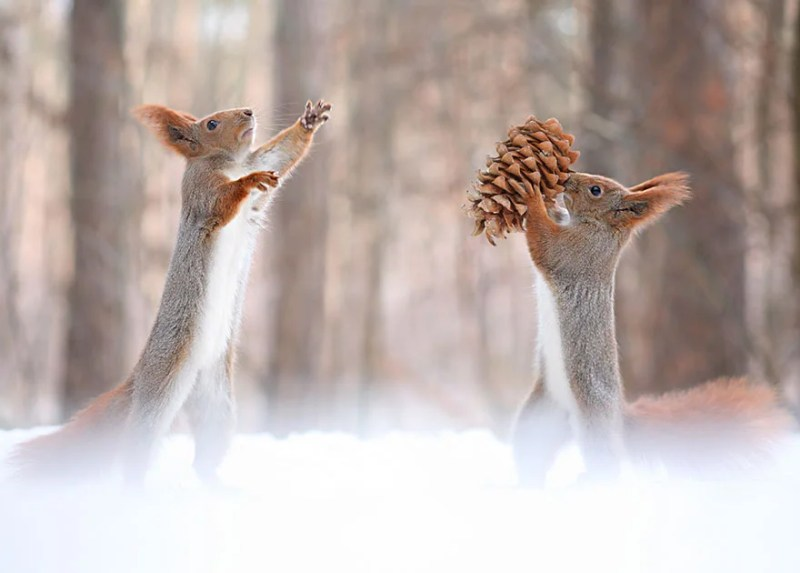 squirrel-photography-russia-vadim-trunov-vinegret-8