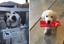 15 фотографий с очень «злыми собаками».