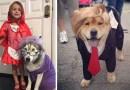 20 ужасно смешных костюмов на Хэллоуин для собак.