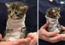 Котенок, спасенный от урагана «Мэтью», получил крошечный свитер из носка и обрел свой новый дом.