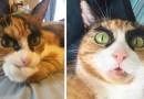 Знакомьтесь, бровастая кошка по кличке Лилли.