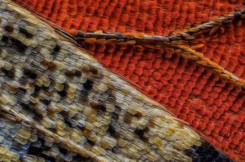 nikon-small-world-photography-winners-2016-vinegret-11