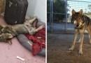 Мужчина приютил у себя дома маленького щенка, но когда тот подрос, то он оказался совсем не собакой…