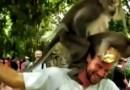 Видео: Обезьяны выбрались на голову туристу и начали делать там непристойные вещи.