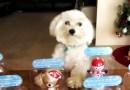 Это видео открывает секрет появления на свет игрушек с качающимися головами.