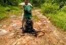 Видео: Мужчина выпускает на волю одновременно 285 змей.