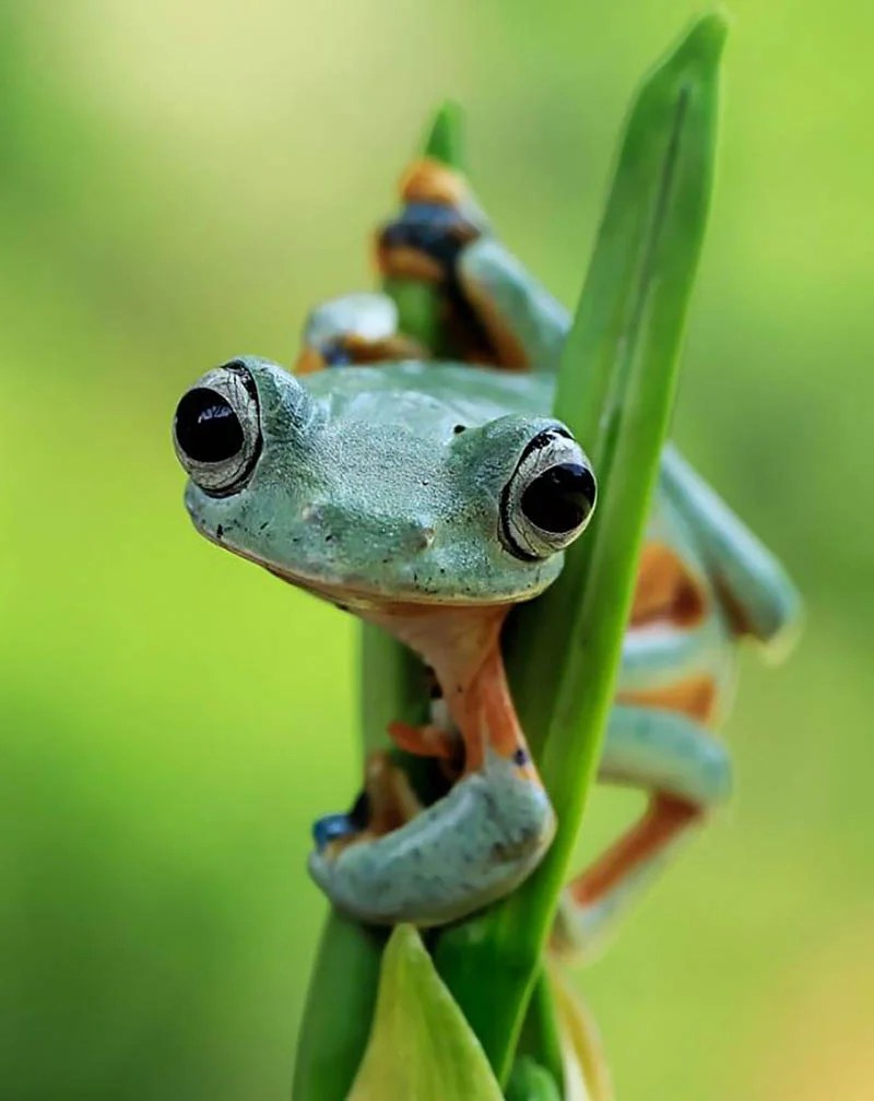frog-photography-tanto-yensen-vinegret-18