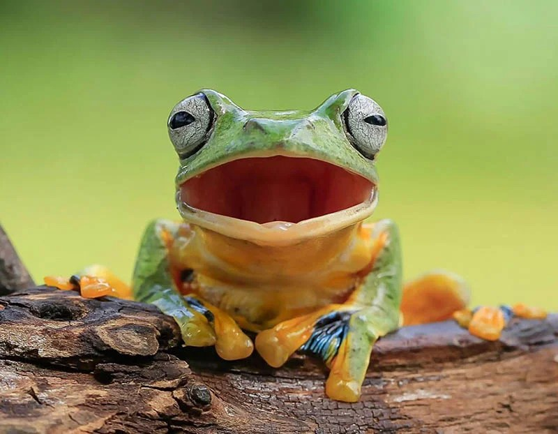 frog-photography-tanto-yensen-vinegret-6