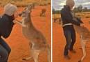 Это благодарное кенгуру на протяжение многих лет, каждый день, обнимает своих спасителей.