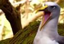 Дурацкое, но смешное видео, в котором аудио животных с фильма «Planet Earth II» заменили человеческим криком.