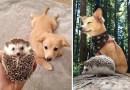 Фотографии животных, которые взрослели вместе.