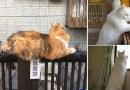 Кошки эволюционируют! Напуганные люди делятся фотографиями, на которых животные невосприимчивы к сдерживающим их шипам.