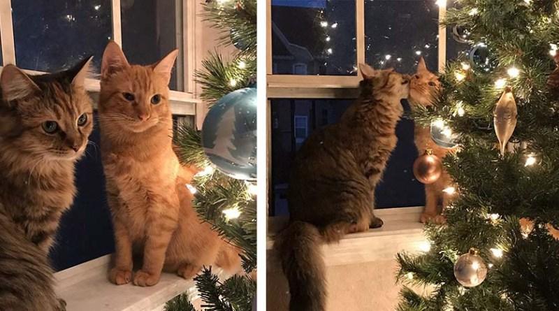 Эти кот и кошка так влюблены друг в друга, что не в состоянии сдерживать свои чувства.