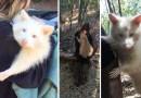 Женщина спасла агрессивного енота-альбиноса из ужасных условий, после чего животное «растаяло» и стало добрее.