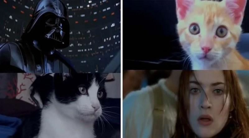 Видео: Кошки обыгрывают сценки из популярных кинофильмов.