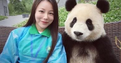 Панда, которая знает толк в хорошем селфи.