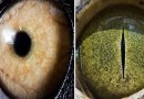Тест: Угадайте представителя фауны по макроснимку его глаза.