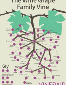 The wine grape family vine infographic also vinepair rh