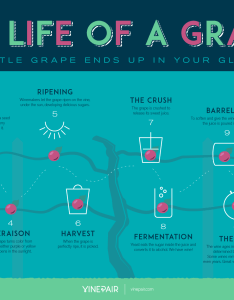 How it becomes alcohol also charts that  ll help you look like  bona fide wine expert huffpost rh huffingtonpost