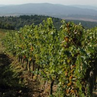 In the heart of Chianti: la Castellina winery #chianti #tuscany #wine