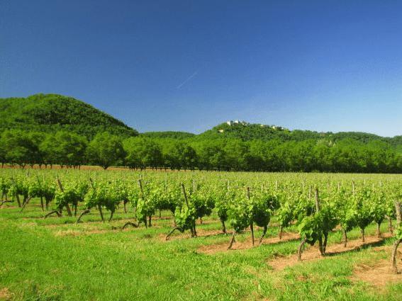Vignoble Les Vignerons du Brulhois
