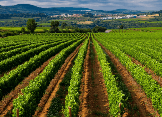 Photo du Vignoble du Domaine Sumarroca