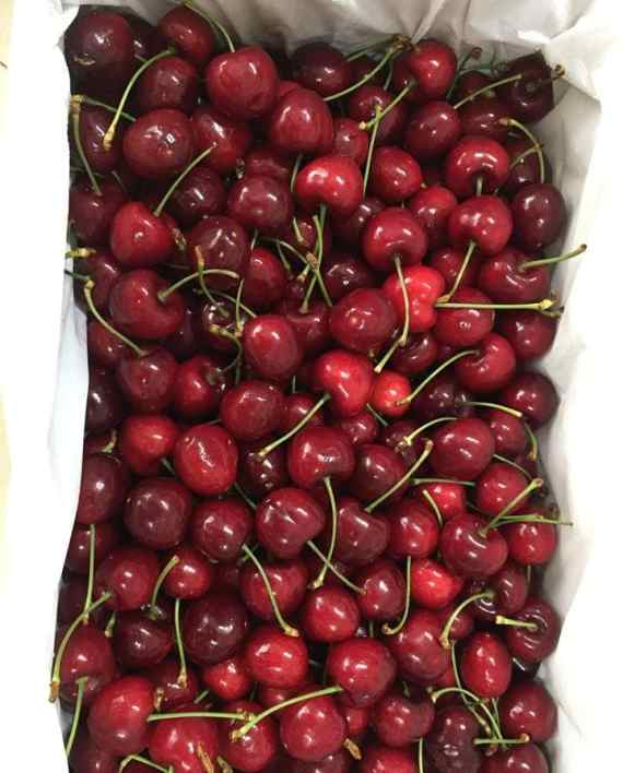 Cherry New Zealand nhập khẩu - Vinfruits.com
