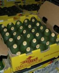 Bơ Hass Úc – Vinfruits.com
