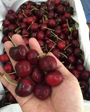 Cherry Úc nhập khẩu - Vinfruits.com