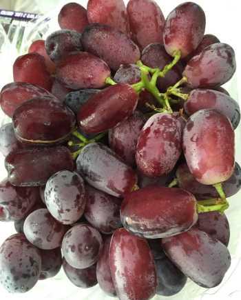 Nho Nicolo - Vinfruits.com